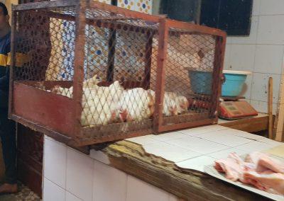 Kippen worden levend verkocht